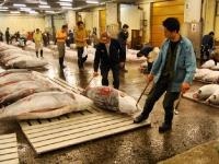 tsukiji-fish-market-tokyo-japan-tuna-auction.jpg