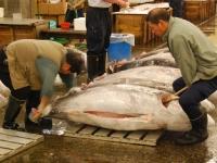 tsukiji-fish-market-tokyo-japan-tuna-auction6.jpg