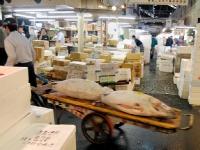 tsukiji-fish-market-tokyo-japan-tuna-auction7.jpg