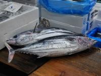 tsukiji-fish-market-tokyo-japan-tuna-auction9.jpg