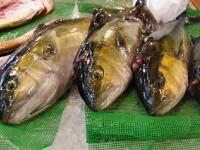tsukiji-fish-market-tokyo-japan-tuna-auction91.jpg