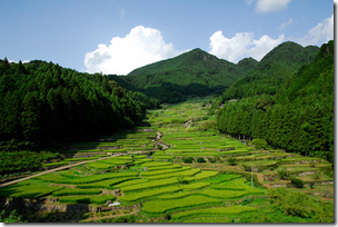 Semada Rice Fields, Ishikawa, Japan