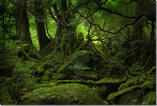 Yakushima UNESCO Japan