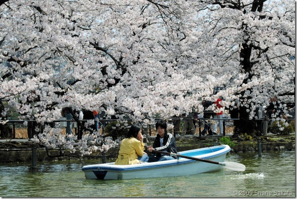 Ueno Shinobazu Pond Rowboat