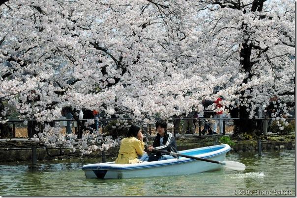 Ueno Shinobazu Pond Rowboat