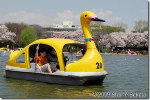 Ueno Shinobazu Pond Swan Boat