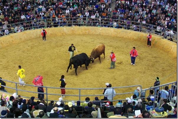 Okinawa Bullfighting Ring Japan