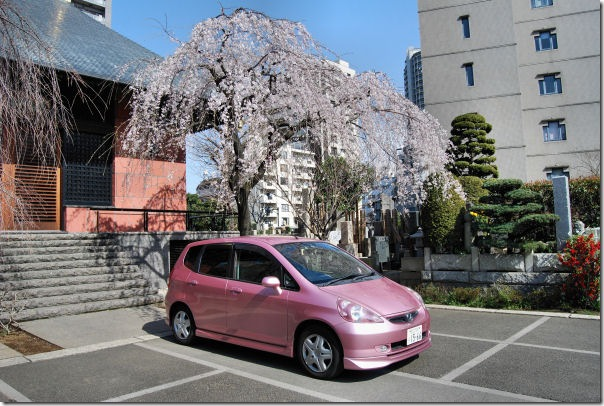 Small Cars Cherry Blossoms Japan