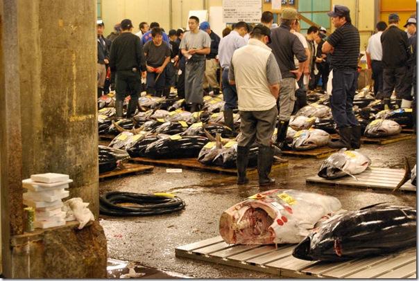 Tsukiji Fish Market Tokyo Japan Tuna Auction3
