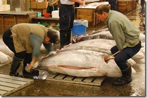 Tsukiji Fish Market Tokyo Japan Tuna Auction6