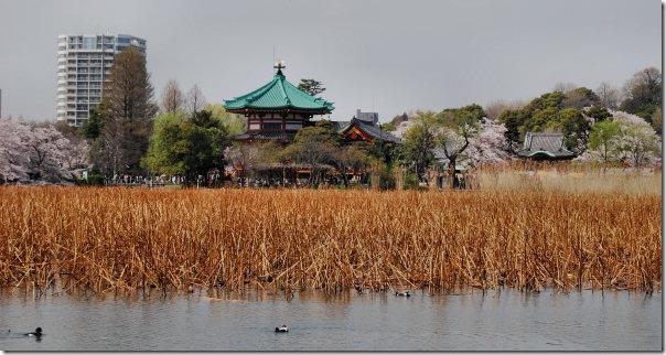 Ueno Bentizen Temple Tokyo